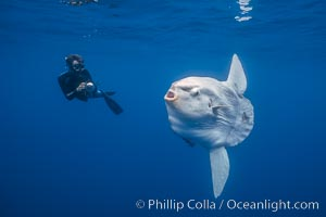 Ocean sunfish and photographer, open ocean. San Diego, California, USA, Mola mola, natural history stock photograph, photo id 03324