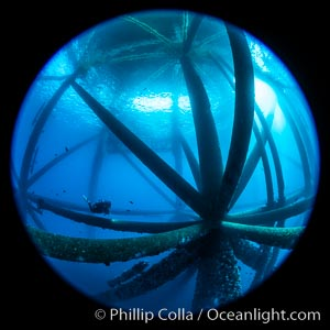 Oil Rig Ellen and Elly, Underwater Structure. Long Beach, California, USA, natural history stock photograph, photo id 34662