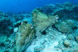 Enormous Porites lobata coral head, overturned by storm surge, Clipperton Island, Porites lobata