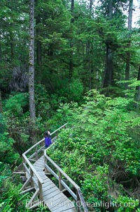 Hiker admires the temperate rainforest along the Rainforest Trail in Pacific Rim NP, one of the best places along the Pacific Coast to experience an old-growth rain forest, complete with western hemlock, red cedar and amabilis fir trees. Moss gardens hang from tree crevices, forming a base for many ferns and conifer seedlings, Pacific Rim National Park, British Columbia, Canada