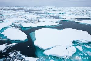 Pack ice and brash ice fills the Weddell Sea, near the Antarctic Peninsula.  This pack ice is a combination of broken pieces of icebergs, sea ice that has formed on the ocean. Southern Ocean, natural history stock photograph, photo id 24792