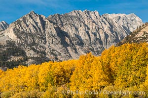 Turning aspen trees and Paiute Peak, Bishop Creek Canyon, Eastern Sierra Nevada, Populus tremuloides, Bishop Creek Canyon, Sierra Nevada Mountains