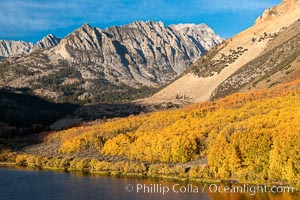 Paiute Peak, Aspen Trees and North Lake, fal colors, Bishop Creek Canyon, Populus tremuloides, Bishop Creek Canyon, Sierra Nevada Mountains