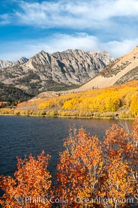 Paiute Peak, Aspen Trees and North Lake, fal colors, Bishop Creek Canyon. Bishop Creek Canyon, Sierra Nevada Mountains, California, USA, Populus tremuloides, natural history stock photograph, photo id 36453