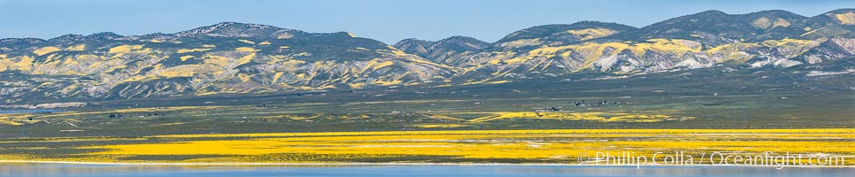 A Panorama of Wildflowers blooms across Carrizo Plains National Monument, during the 2017 Superbloom. Carrizo Plain National Monument, California, USA, natural history stock photograph, photo id 33239