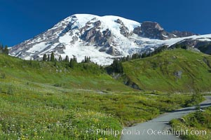 Paradise Meadows and Mount Rainier, summer. Paradise Meadows, Mount Rainier National Park, Washington, USA, natural history stock photograph, photo id 13894