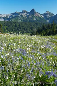 Paradise Meadows, wildflowers and Tatoosh Range, summer, Mount Rainier National Park, Washington