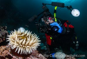 Photographer and anemone, Browning Pass, Vancouver Island