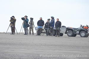 Photographers wait on the beach for brown bears clamming at low tide, Lake Clark National Park, Alaska
