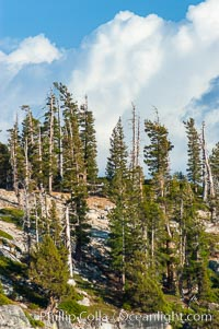 Pine trees grow on granite mountaintops, Sierra High Country near Olmsted Point, Yosemite National Park, California