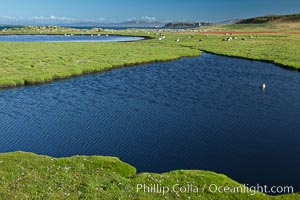Ponds and grasses, in the interior of Carcass Island near Dyke Bay