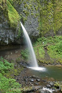 Ponytail Falls, where Horsetail Creeks drops 100 feet over an overhang below which hikers can walk. Ponytail Falls, Columbia River Gorge National Scenic Area, Oregon, USA, natural history stock photograph, photo id 19344