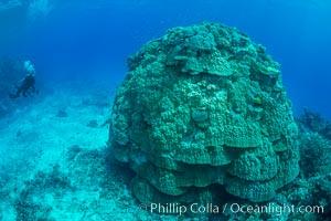Enormous pristine 1000-year-old Porites coral head, boulder coral, Fiji. Wakaya Island, Lomaiviti Archipelago, Fiji, natural history stock photograph, photo id 31548