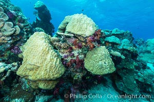 Porites boulder coral and other hard corals, on pristine tropical reef, Fiji, Nigali Passage, Gau Island, Lomaiviti Archipelago
