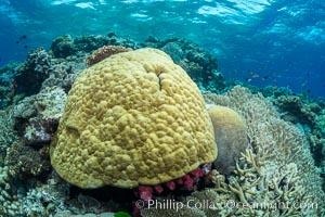 Porites boulder coral and other hard corals, on pristine tropical reef, Fiji, Vatu I Ra Passage, Bligh Waters, Viti Levu  Island