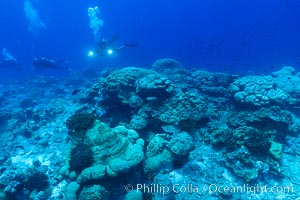 Coral reef expanse composed primarily of porites lobata, Clipperton Island, near eastern Pacific. Clipperton Island, France, Porites lobata, natural history stock photograph, photo id 33047