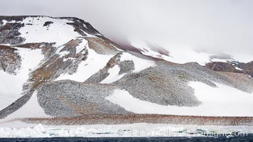 Enormous colony of Adelie penguins covers the hillsides of Paulet Island. Paulet Island, Antarctic Peninsula, Antarctica, Pygoscelis adeliae, natural history stock photograph, photo id 24836