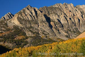 Sierra Nevada mountains, appear above a grove of colorful aspen trees changing to yellow and orange in fall, autumn, Populus tremuloides, Bishop Creek Canyon, Sierra Nevada Mountains