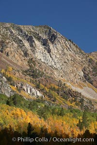 The Hunchback, a peak rising above the South Fork of Bishop Creek Canyon, with yellow and orange aspen trees changing to their fall colors. Bishop Creek Canyon, Sierra Nevada Mountains, Bishop, California, USA, Populus tremuloides, natural history stock photograph, photo id 23361