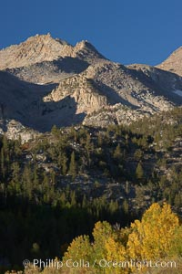 Sierra Nevada mountains, appear above a grove of colorful aspen trees changing to yellow and orange in fall, autumn. Bishop Creek Canyon, Sierra Nevada Mountains, Bishop, California, USA, Populus tremuloides, natural history stock photograph, photo id 23372