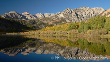 Aspen trees in fall, change in color to yellow, orange and red, reflected in the calm waters of North Lake. Bishop Creek Canyon, Sierra Nevada Mountains, California, USA, Populus tremuloides, natural history stock photograph, photo id 23388