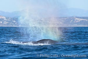 A rainbow forms in a blue whales spout, La Jolla, California