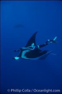 Manta ray and freediver, Manta birostris, San Benedicto Island (Islas Revillagigedos)