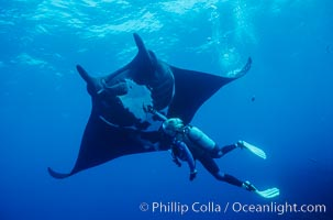 Manta ray and scuba diver. San Benedicto Island (Islas Revillagigedos), Baja California, Mexico, Manta birostris, natural history stock photograph, photo id 02461