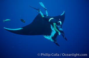 Manta ray and freediver. San Benedicto Island (Islas Revillagigedos), Baja California, Mexico, Manta birostris, natural history stock photograph, photo id 02464