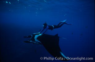 Manta ray and freediver. San Benedicto Island (Islas Revillagigedos), Baja California, Mexico, Manta birostris, natural history stock photograph, photo id 02472