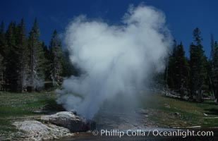 Riverside Geyser at peak eruption, arcing over the Firehole River. Upper Geyser Basin, Yellowstone National Park, Wyoming, USA, natural history stock photograph, photo id 07200