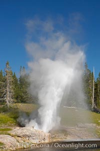 A rainbow appears in the spray of Riverside Geyser as it erupts over the Firehole River.  Riverside is a very predictable geyser.  Its eruptions last 30 minutes, reach heights of 75 feet and are usually spaced about 6 hours apart.  Upper Geyser Basin, Yellowstone National Park, Wyoming