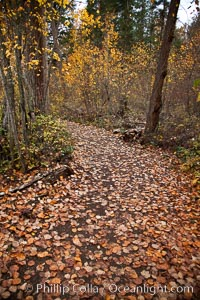 Hiking trail, trees, autumn leaves, Adams River, Roderick Haig-Brown Provincial Park, British Columbia, Canada