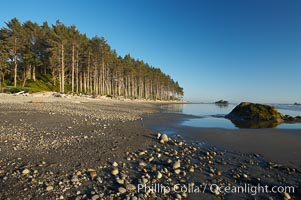 Ruby Beach, sunset lights up the trees along the beach, Olympic National Park, Washington