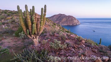 Rugged coastline on Isla Espiritu Santo, aerial view, Cardon Cactus, Sea of Cortez
