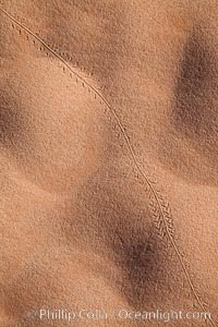 Sand ripples in morning light. Valley of Fire State Park, Nevada, USA, natural history stock photograph, photo id 26494