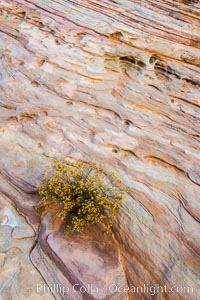 Sandstone details, red rocks, Valley of Fire, Valley of Fire State Park
