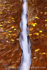 Water rushes through a narrow crack, in the red sandstone of Zion National Park, with fallen autumn leaves. Zion National Park, Utah, USA, natural history stock photograph, photo id 26143