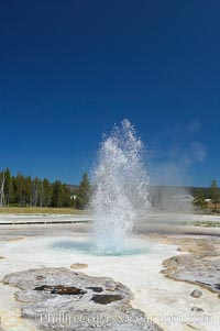 Sawmill Geyser erupting.  Sawmill Geyser is a fountain-type geyser and, in some circumstances, can be erupting about one-third of the time up to heights of 35 feet.  Upper Geyser Basin. Yellowstone National Park, Wyoming, USA, natural history stock photograph, photo id 13392
