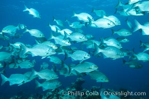 Schooling fish over coral reef, Grand Cayman Island. Cayman Islands, natural history stock photograph, photo id 32061