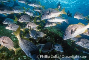 Schooling fishes in the Galapagos Islands