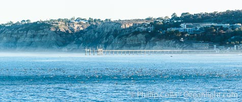 Scripps Pier, Scripps Institute of Oceanography Research Pier, viewed from Point La Jolla, surfers and seabirds, Torrey Pines seacliffs