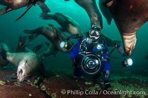 SCUBA Diver and Steller Sea Lions Underwater,  underwater photographer, Hornby Island, British Columbia, Canada, Eumetopias jubatus, Norris Rocks