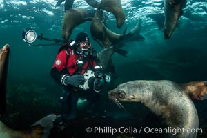 SCUBA Diver and Steller Sea Lions Underwater,  underwater photographer, Hornby Island, British Columbia, Canada., Eumetopias jubatus, natural history stock photograph, photo id 36130