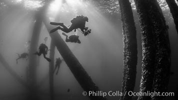 SCUBA Divers explore an oil platform, Long Beach, California