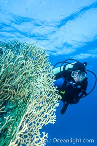 SCUBA Diving in the Red Sea, Egypt, Egyptian Red Sea