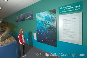 "A young visitor views wall displays at the ""Water"" exhibit, San Diego Natural History Museum, Balboa Park"