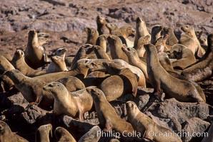 California sea lion colony, Los Coronado Islands, Zalophus californianus, Coronado Islands (Islas Coronado)
