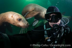 Selfie with Steller sea lion underwater, Norris Rocks, Hornby Island, British Columbia, Canada., Eumetopias jubatus, natural history stock photograph, photo id 32794