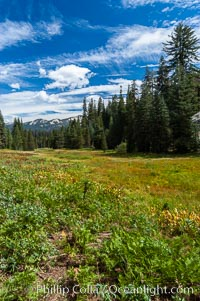 Long Meadow in late summer, Sequoia Kings Canyon National Park, California
